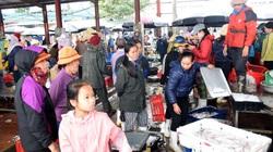 Nghệ An: Báo động tình trạng chủ quan với dịch Covid-19 tại các cảng cá