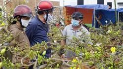 """Sự thật bất ngờ ở thủ phủ mai vàng miền Trung, người trồng mai """"mếu máo"""" ngày 30 Tết"""