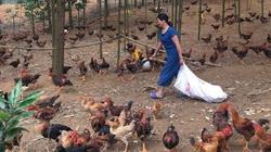 Giá gia cầm hôm nay 10/2 (29 tháng Chạp): Dự đoán giá các loại gà tại các vùng đầu năm mới 2021