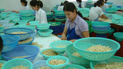 Mỹ, Trung Quốc tới tấp mua, xuất khẩu loại nông sản này tăng tới 78%
