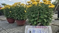 Đà Nẵng: Hoa, cây cảnh đại hạ giá từ tiền triệu xuống tiền trăm vẫn ế chỏng chơ