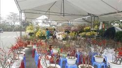 Vĩnh Phúc: Hoa tươi và cây cảnh mất giá ngày cuối năm