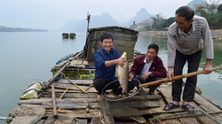 Quảng Bình: Ở nơi này nông dân ăn Tết to nhờ nuôi cá trắm cỏ to dài trên sông Gianh