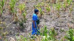 Trên 7 triệu người Trung Mỹ trong tình trạng khủng hoảng lương thực
