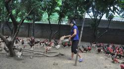 Giá gia cầm hôm nay 15/2: Cập nhật giá gà, vịt mới nhất tại các vùng