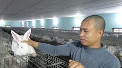 """Thái Bình: Nuôi thỏ kiểu lạ lùng, cho thỏ nghe nhạc trữ tình để đàn thỏ """"đẻ"""" ra 40 triệu/tháng đều như vắt chanh"""