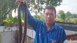 """Ông nông dân tỉnh Tiền Giang nuôi la liệt rắn trong chuồng, vơ 1 cái bắt được cả đống, nhiều người xem """"hết hồn"""""""