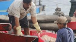 Chùm ảnh: Chuyến ra biển đầu tiên của năm mới Tân Sửu 2021, ngư dân Quảng Bình đã trúng đậm