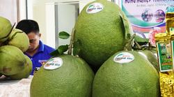 Bình Định: Một ông nông dân bán vé số bất ngờ giàu lên nhờ trồng bưởi da xanh của tỉnh Bến Tre
