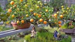 7 loại cây phong thủy Thần Tài ưa thích, đầu năm Tân Sửu rước lộc vào nhà