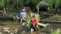 TT-Huế: Lũ cá, tôm từ rừng ngập mặn tràn ra đầm phá, dân thỏa sức vẫy vùng giăng lưới, buông câu