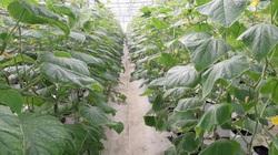 Thái Nguyên: Hỗ trợ gần 71 tỷ đồng cho sản xuất nông nghiệp