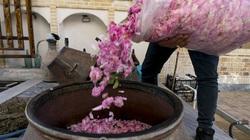 Quy trình cực nghiêm ngặt để sản xuất ra loại nước hoa hồng tốt nhất thế giới