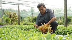 Tây Ninh: Nông dân trồng rau rừng tươi non, bán giá đắt mà các siêu thị lớn nhất TP HCM vẫn đặt mua