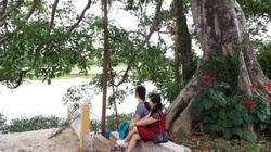 Quảng Nam: Độc đáo, rừng cừa cổ thụ toàn cây khủng giữa thành phố Tam Kỳ