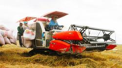 Vì sao lúa IR 50404 ở ĐBSCL có giá bán cao, cầu vượt cung nhưng không thể trồng thêm trong vụ hè thu tới?