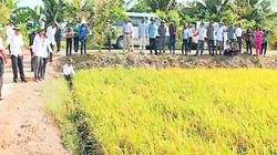 """Vĩnh Long: Áp dụng thành công nhiều giải pháp giảm nghèo hiệu quả, bà con nông dân mừng vui """"ăn Tết"""""""