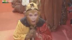 Trong 3 đồ đệ phò tá Đường Tăng, tại sao Phật Tổ Như Lai chỉ phong mình Tôn Ngộ Không thành Phật?