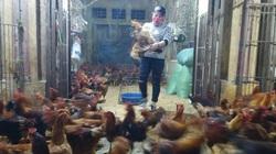 Giá gia cầm hôm nay 19/2: Cập nhật giá gà, vịt mới nhất tại chợ đầu mối và các vùng