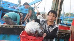 Bình Định: Vùng này đầu xuân năm mới đàn ông phải ăn Tết xa nhà, vật lộn sóng gió săn toàn cá ngừ đại dương