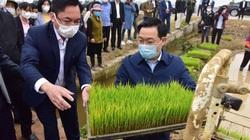 Hà Nội: Bí thư Vương Đình Huệ và Chủ tịch Chu Ngọc Anh xuống đồng đứng máy cấy lúa