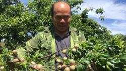 Bỏ ngô, trồng cây ăn quả, nông dân có thu nhập cao