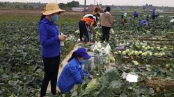 """Dân tình đổ xô """"giải cứu"""" nông sản giúp nông dân Hải Dương"""