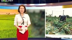 Bản tin thời sự Dân Việt 19/2: Bác bỏ thông tin hàng nghìn tấn rau ế, hỏng ở Hoài Đức (Hà Nội)