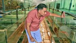 Ông nông dân trẻ tỉnh Bình Dương nuôi loài tôm gì mà được UBND tỉnh tặng danh hiệu nghệ nhân nghề cá cảnh?