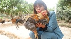 """Bắc Giang: Nuôi gà đồi đặc sản, gà trống thiến bán Tết, nữ nông dân """"bỏ túi"""" hàng trăm triệu đồng."""