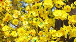 7 loại hoa phong thủy mang tài lộc, phúc khí trong năm Tân Sửu 2021