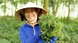"""Nghệ An: Nông dân rủ nhau lội suối săn tìm thứ rau rừng nghe tên đã thấy """"sống thọ"""", ăn quen mồm sẽ """"nghiện"""""""