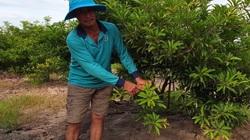 """Cây """"tỷ phú"""" mình đầy gai chi chít ở Tây Ninh là cây gì mà nông dân cứ trồng 1ha lại thu về 1 tỷ?"""