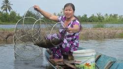 Kiên Giang: Sản lượng lúa gạo cao nhất ĐBSCL, vì sao tỉnh này lại bỏ 1 vụ để nuôi tôm nước lợ trong ruộng?
