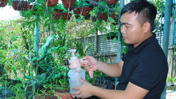 """50 giò lan rừng đột biến đón Tết đẹp mê li trong vườn lan rừng """"khủng"""" của một nông dân tỉnh Hà Tĩnh"""