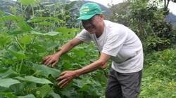 Nhiều hộ nghèo ở Bình Định tự nguyện xin thoát nghèo