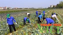 """Tuổi trẻ Hải Dương chung tay cùng nông dân """"giải cứu"""" nông sản"""