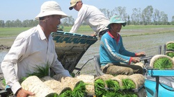 Hợp tác xã giúp nông dân, nông nghiệp vượt qua khủng hoảng