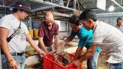 """Bạc Liêu: Dịch Covid-19 làm giá lươn thịt giảm 50.000 đồng/ký, nhiều hộ nuôi lươn không bùn đành """"bấm bụng """" làm điều này"""