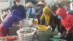 Hải sản Vân Đồn hối hả xuất bến sau dỡ bỏ phong tỏa