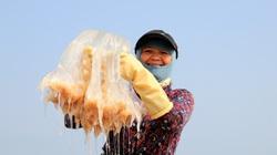 Hà Tĩnh: Đánh bắt con mềm nhũn, không não, không tim, ngư dân thu được gần chỉ rưỡi vàng 9999