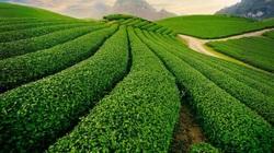 Đất nông nghiệp chưa có sổ đỏ có được phép chuyển nhượng không?