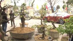 Huế: Bắt giữ đối tượng thực hiện hàng loạt vụ trộm cây mai cảnh có giá trị lớn