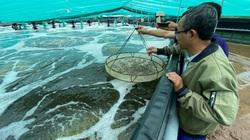 Minh Phú chi 2.819 tỷ làm hệ thống cấp nước biển sạch nuôi tôm công nghệ cao