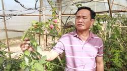 3 người ở Lâm Đồng được Chủ tịch nước tặng thưởng Huân chương Lao động là ai?