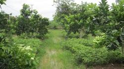 Khánh Hòa: Giá đất nông nghiệp rẻ bất ngờ, chỉ vài chục ngàn/m2