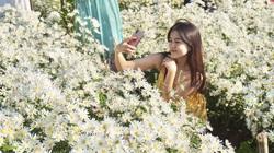 Đà Nẵng: Diện trong những chiếc váy hai dây sexy, hàng nghìn du khách đổ xô đi check in vườn cúc hoạ mi