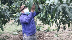 Rủ nhau trồng cây ăn quả, cả bản thu nhập ổn định