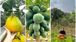 Phát ghen vì vườn rau xanh tốt um, hoa trái lủng lẳng của hoa hậu Việt Nam Đỗ Thị Hà