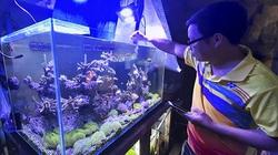 """Khánh Hòa: Nhà khoa học 9X nuôi loài san hô và mày mò ra cách kích thích san hô """"đẻ"""" nhân tạo là ai?"""